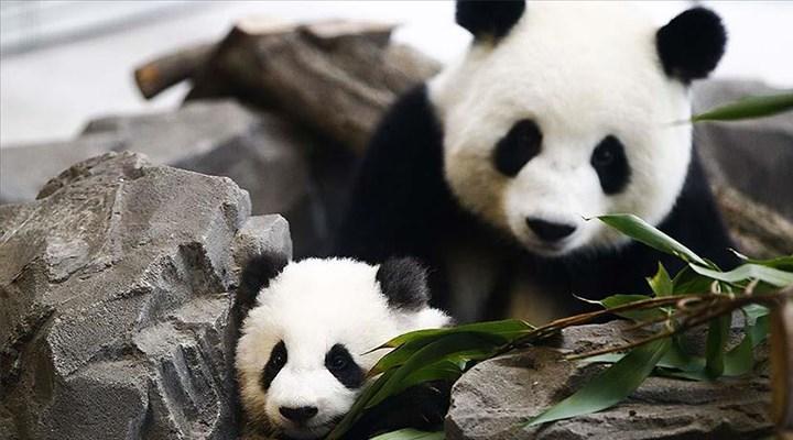 Hayvanat bahçelerinden korkunç açıklama: Feda edilebilecek hayvanların listesini çıkardık