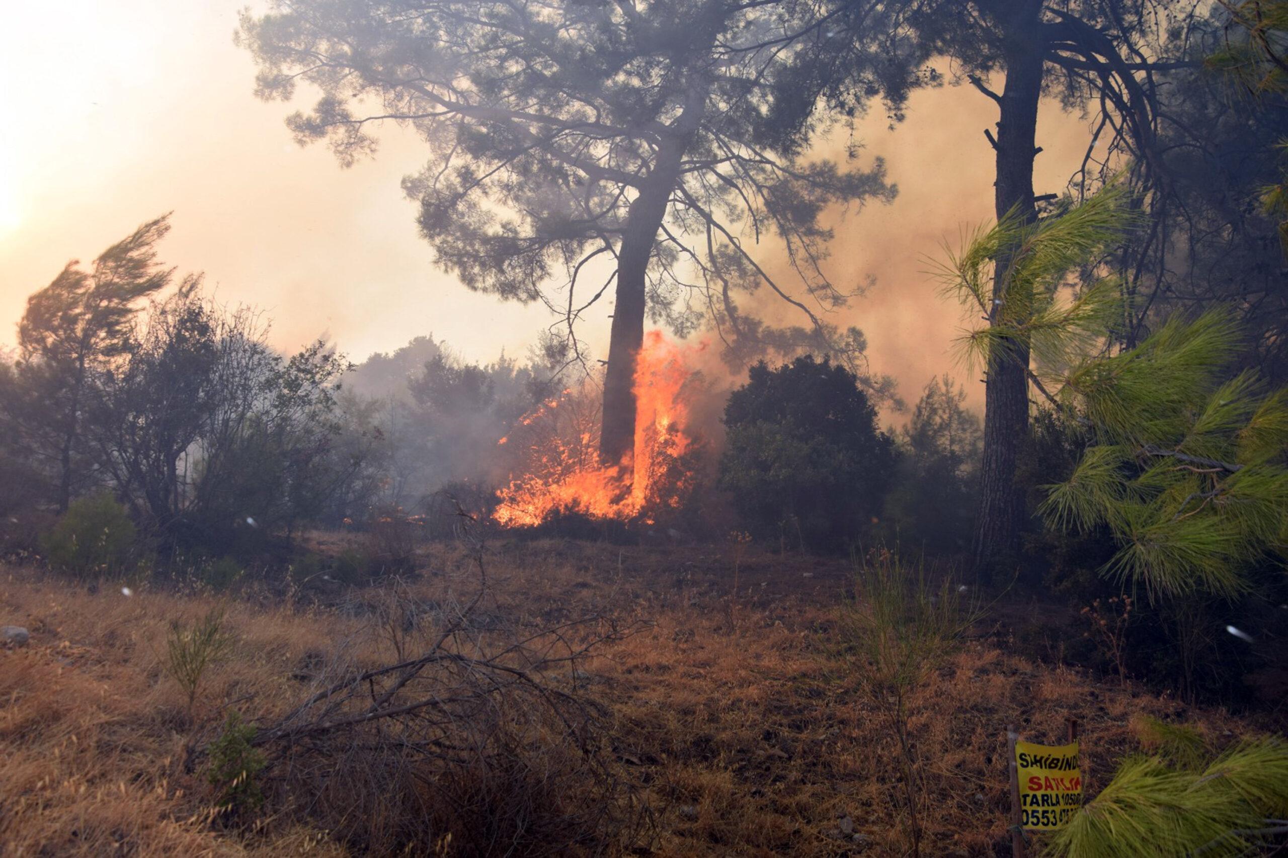 Antalya Adrasan yangını kontrol altında