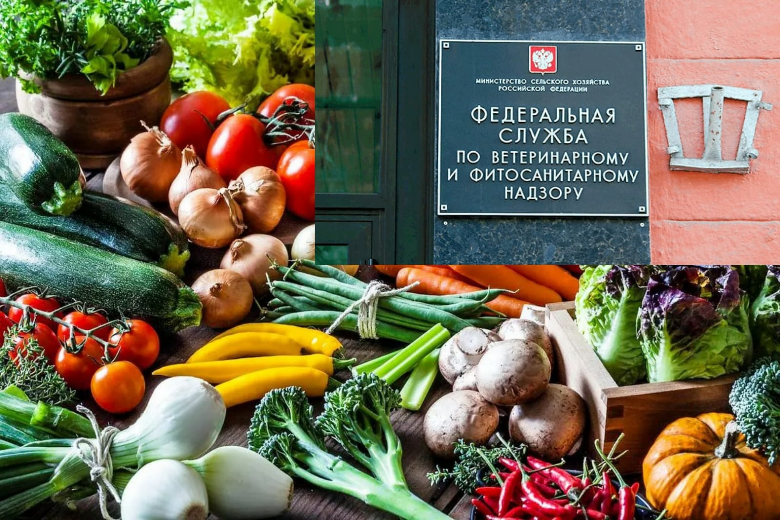 Türkiye'den domates ve biber alımını yasaklayan Rusya Azerbaycan'dan elma alımını da durdurdu!